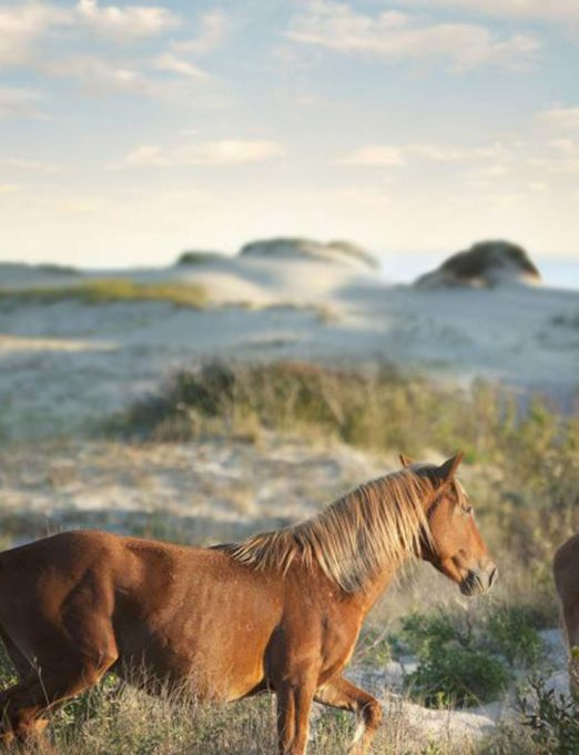 two wild horses on a a seashore