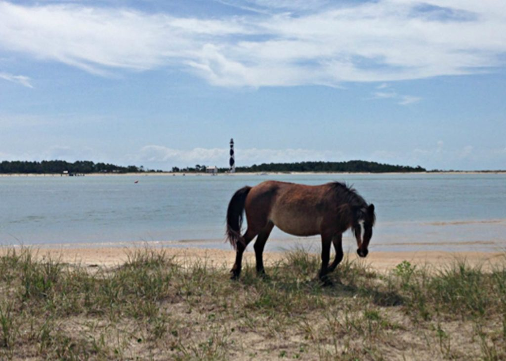wild horse in the grass and the cape lookout lighthouse in the distance
