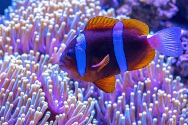 bright striped fish in aquarium