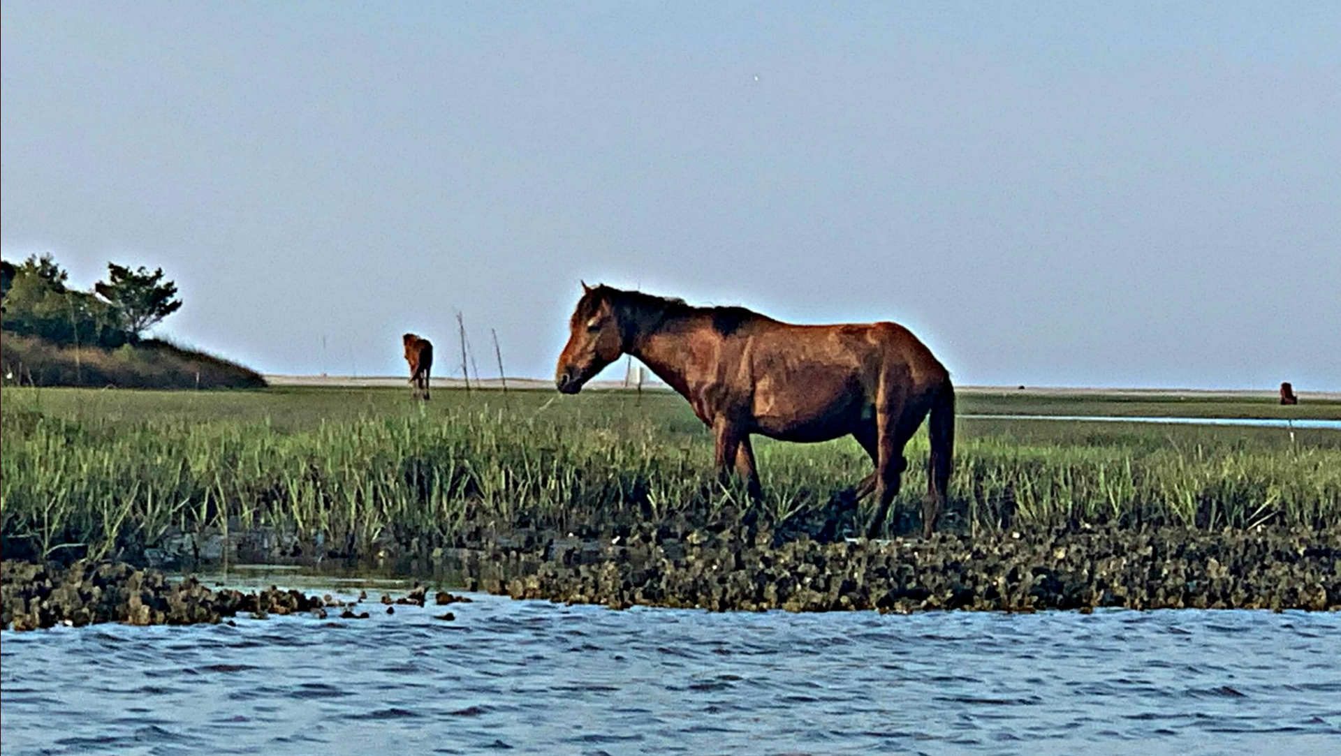 wild horse at beaufort nc reserve