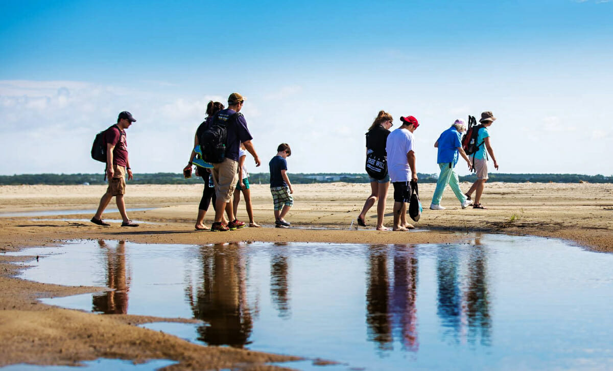 Group of people searching beach for shells