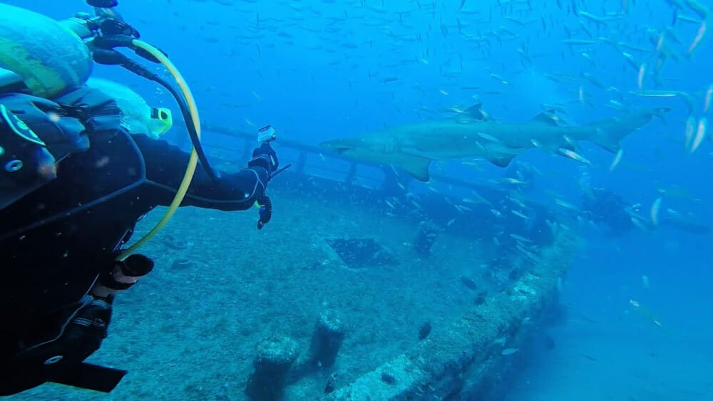 Diver near ship wreck with shark swimming past