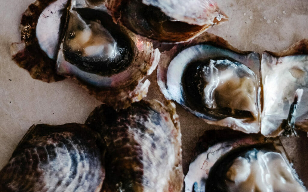 Fresh, shucked oysters